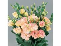 Эустома(Лизиантус) махровая (Eustoma grandiflorum) Arena Apricot (5 др)