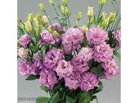 Эустома(Лизиантус) махровая (Eustoma grandiflorum) Super Magic Lilac(5 др)