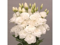 Эустома(Лизиантус) махровая (Eustoma grandiflorum) Super Magic White,(5 др)